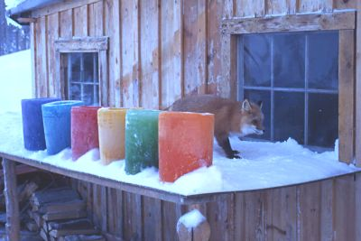 Fox and ice candles