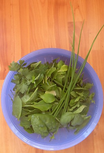 just-harvested salad greens
