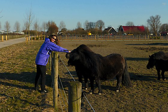 Jen petting short, black ponies.