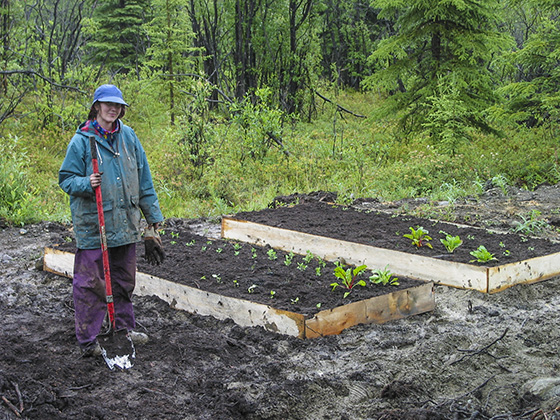 Raised garden beds in mud