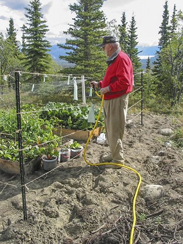Bob watering the garden.