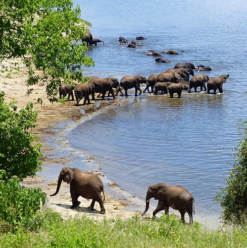 Elephants on the beach and in the water.
