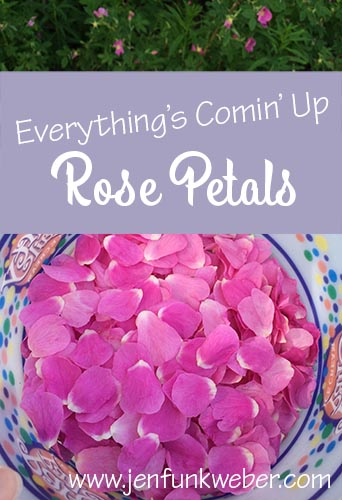 Everything's Comin' Up Rose Petals