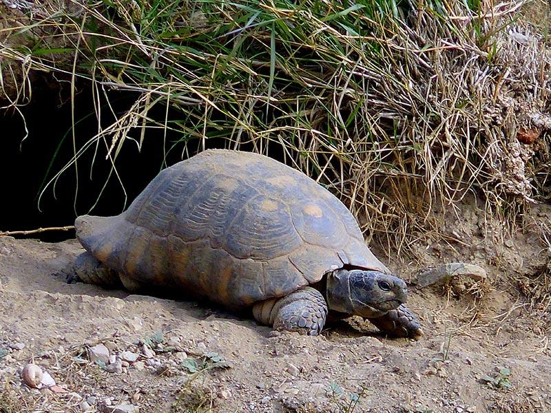 Kerameikos tortoise - Jen Funk Weber