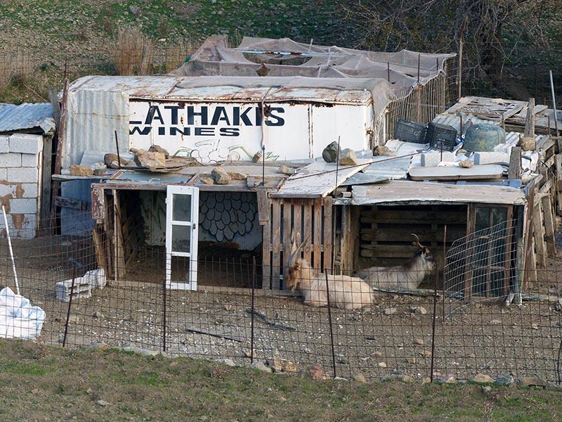 Goats in pen, Leros - Jen Funk Weber