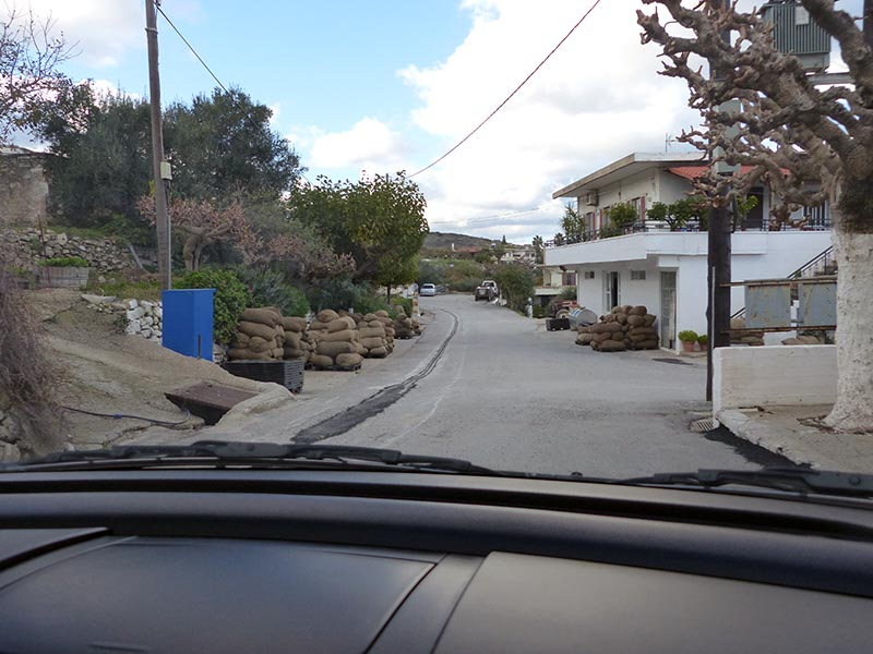 Olives beside road, driving on Crete - Jen Funk Weber