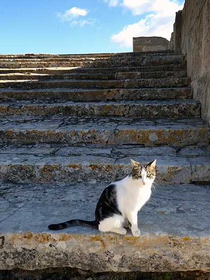 Phaestos feline guide, Crete, Greece - Jen Funk Weber