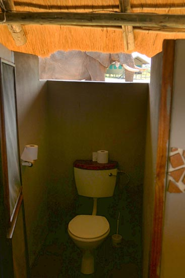 Toilet with elephant outside, Elephant Sands, Botswana