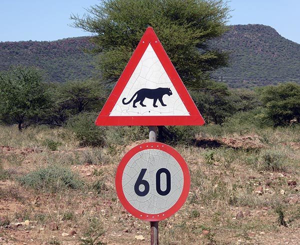 Leopard, animal sign in southern Africa