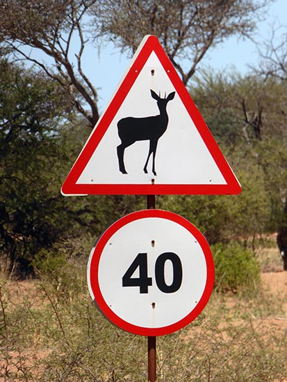 Steenbok, animal sign in southern Africa
